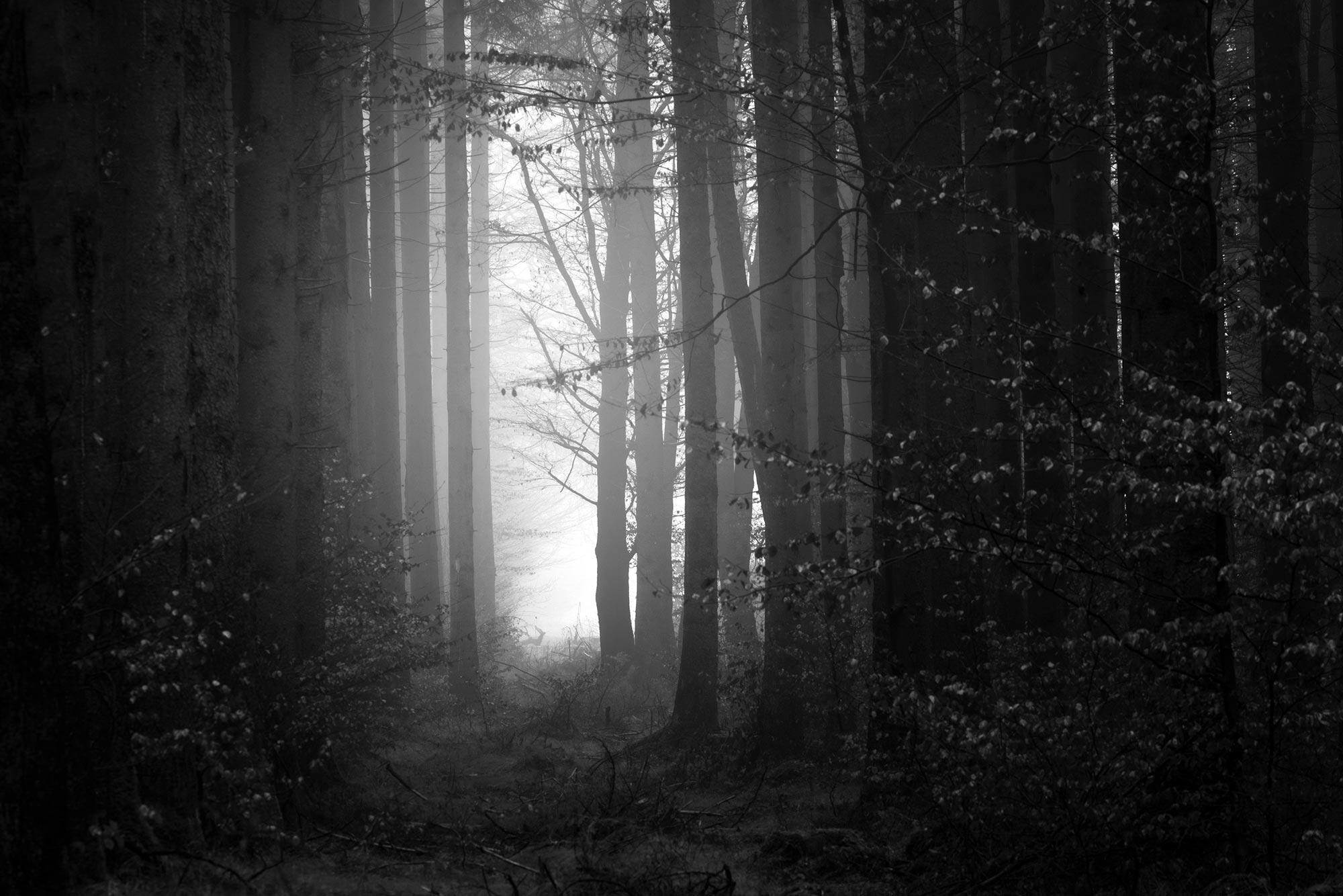 https://kobedigital.com/wp-content/uploads/2020/12/ServicesStudios_OurApproach_Trees_01.jpg